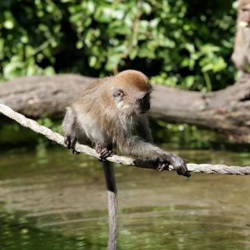 Monkey0