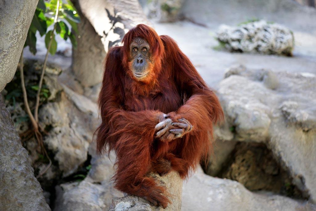 Monkey Jungle1