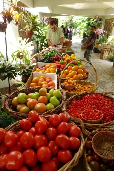 Farmer market botanic2
